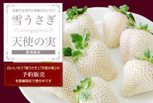 白いイチゴ 画像