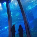 【タラレバ娘】倫子がもこみちとデートした水族館はロケ地どこ?