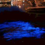 由比ケ浜が青白く光る!原因は夜光虫?神秘的な現象はどこで見られるの?