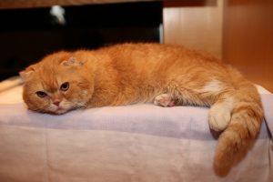 ティティ タレント猫 いきもの係 画像