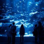 【僕やり】水族館デートのロケ地場所はどこ?すみだ水族館っぽいか