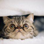 【山田孝之】嫁の名はchiho(ちほ)?隠し子そっくりな猫がTwitterで発覚!