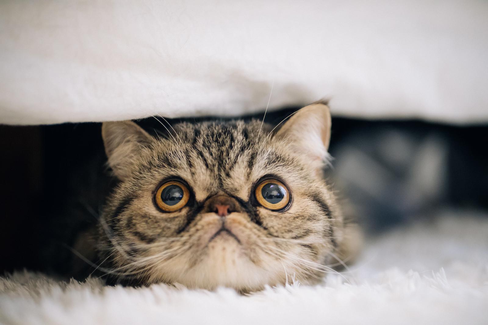 山田孝之 嫁 現在 子供 猫 そっくり 隠し子 画像